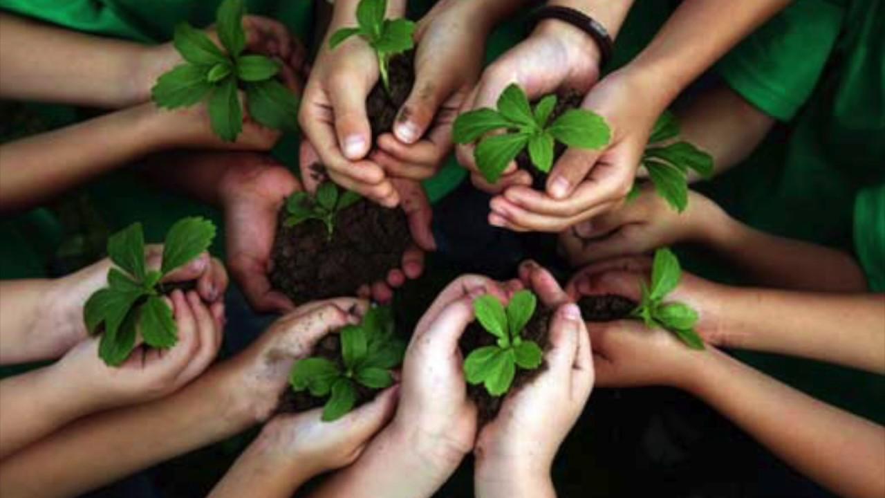 Responsabilidad Civil y Penal por los daños al Medio Ambiente